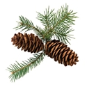 Picture for category Evergreens